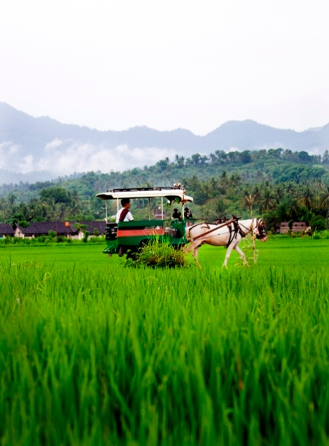 Lombok Carriage - Photo by Nathan Myers