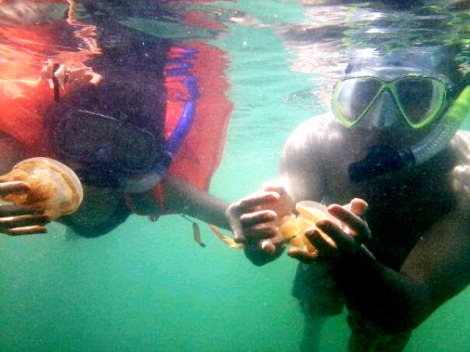 Playing with Jellyfish, Kakaban Island Derawan