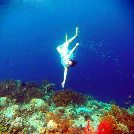 Keindahan Alam bawah Laut Pulau Menjangan - Bali