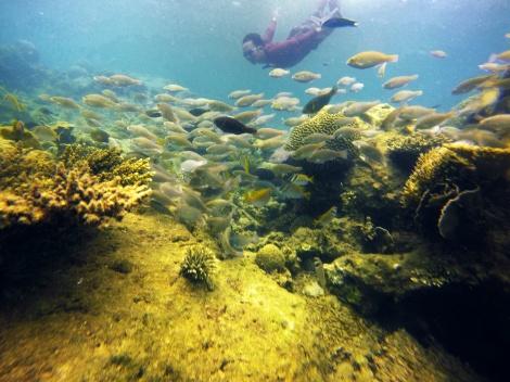 Keindahan dan keragaman alam bawah laut Indonesia